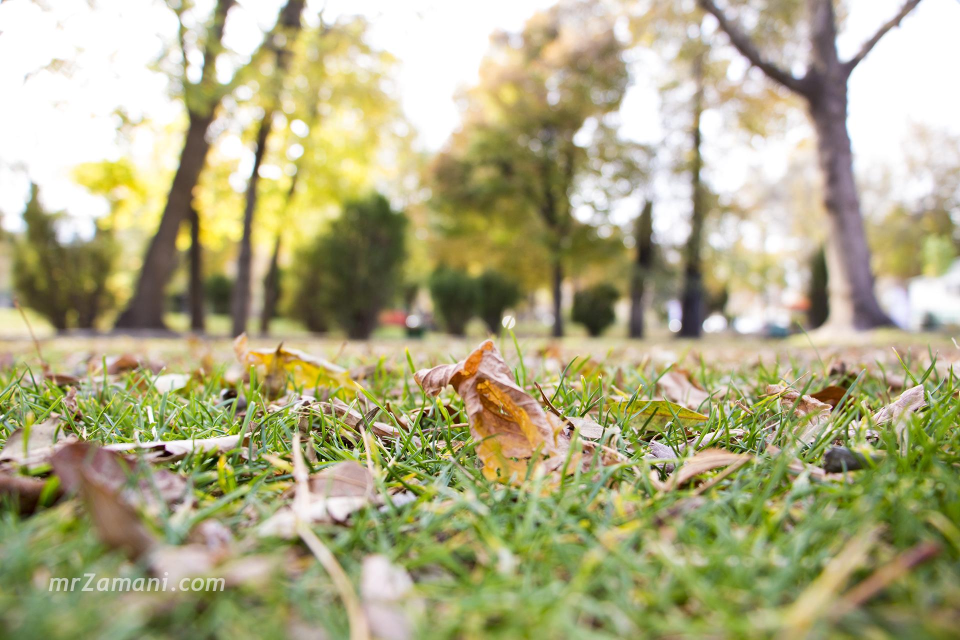 لحظهها (۱) : پادشاه فصلها؛ پاییز