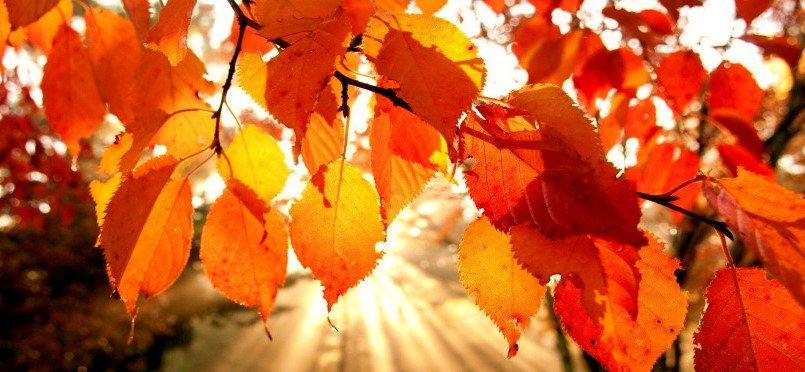 نامه به پاییز