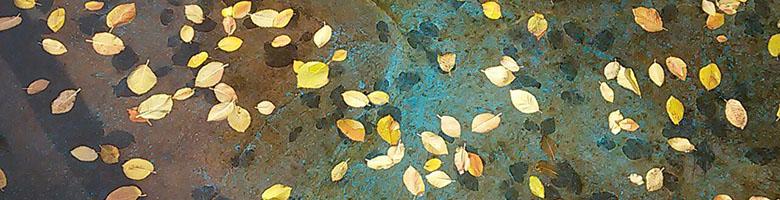 عکس برگ و آب در حوض؛ برای متن: گاهی حالم خوب نیست