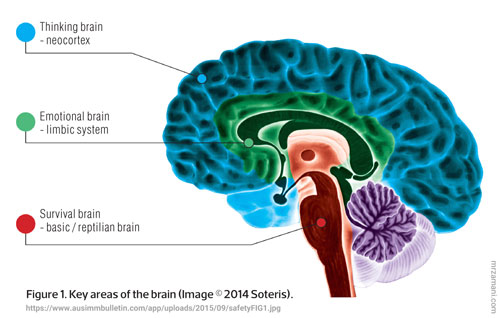 مدل سه تایی رفتار مغز emergent property - لایه حیاتی لایه احساسی لایه منطقی یا عقلایی بودن