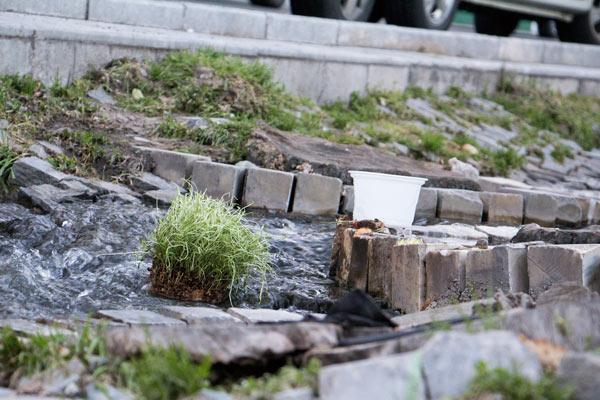 سبزه در جوی آب رها شده - سبزه سیزده به در